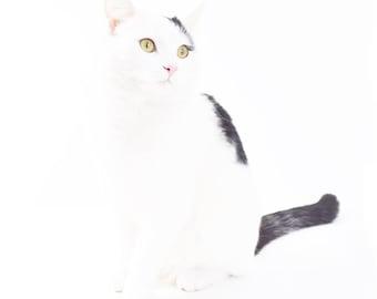 Cat Photo White Cat White Decor White Photo Kitten Photo