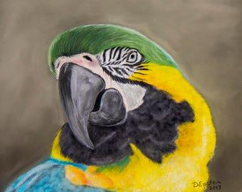 Original Pastel - Macaw