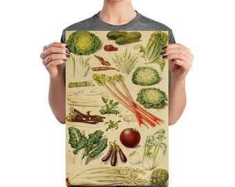 Vintage Kitchen Art Salad Vegetables Poster, Matte Paper, 12 by 18 inches