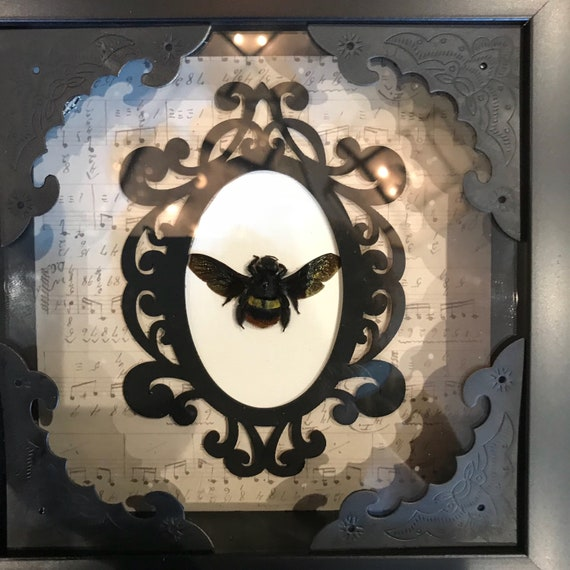 Carpenter bee taxidermy display! Real!