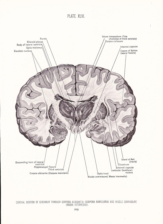 Nett Hippocampus Hirnanatomie Zeitgenössisch - Menschliche Anatomie ...