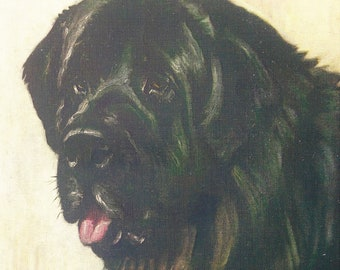 Newfoundland Dog Print. 1920s Vintage Colour Print by F. T. Daws, Wall Hanging, Home Decor
