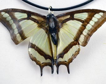 Real Butterfly Necklace - Polyura Narcaea - Hand Cast Resin