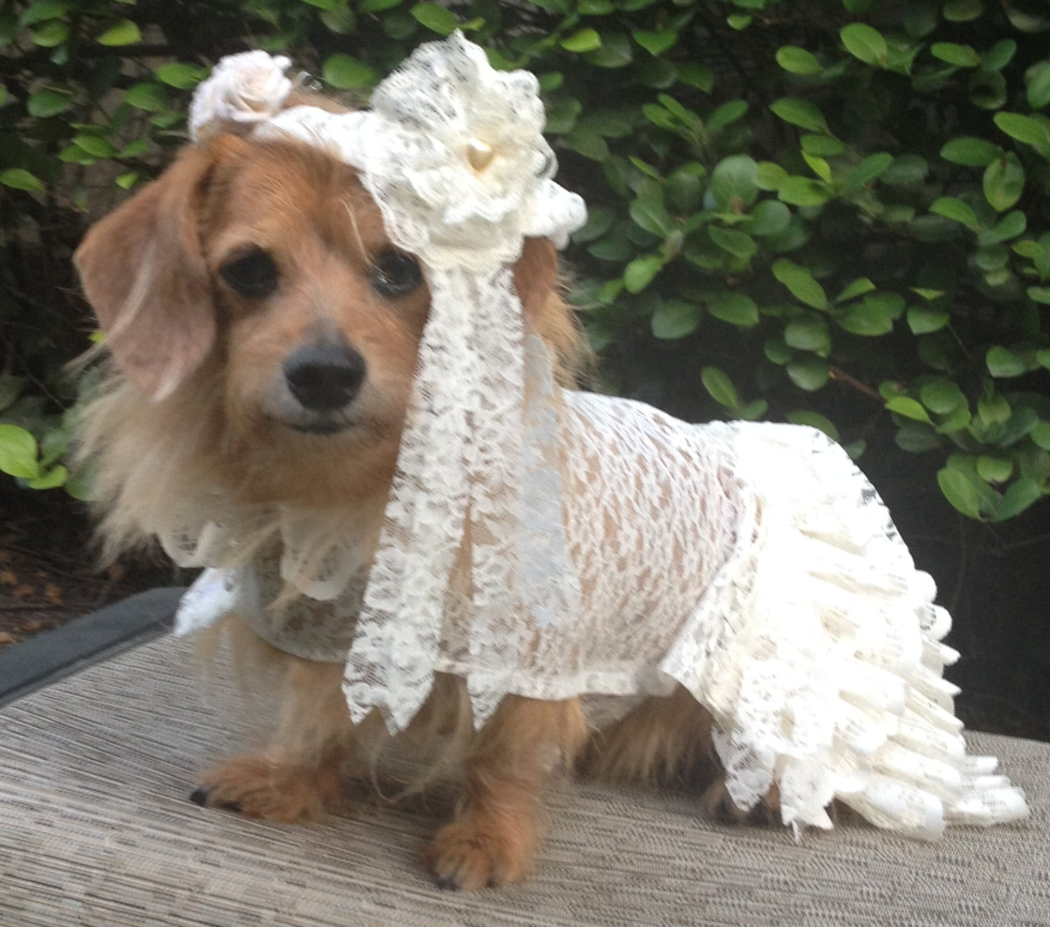 Dog wedding dress with veil by fiercepetfashion zoom ombrellifo Image collections