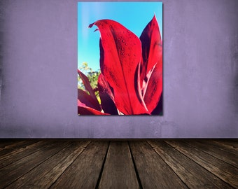 Tropical Plant Detail Decor, Red Leaf Dew Drops, Travel Decor, Wanderlust Decor, Beach House Decor, Hawaii Foliage, 8x12 10x15 12x18 16x24