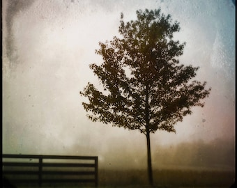 I Must Go In, the Fog is Rising. Photograph, Art Print, Art, Photography, For Home, Wall Art, Wall Decor, Tree, Exquisite, Obscura.