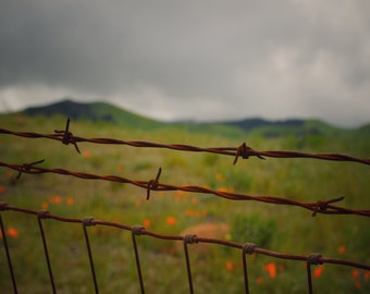 Farm Photography, Nature Photography, California, Fence, Country