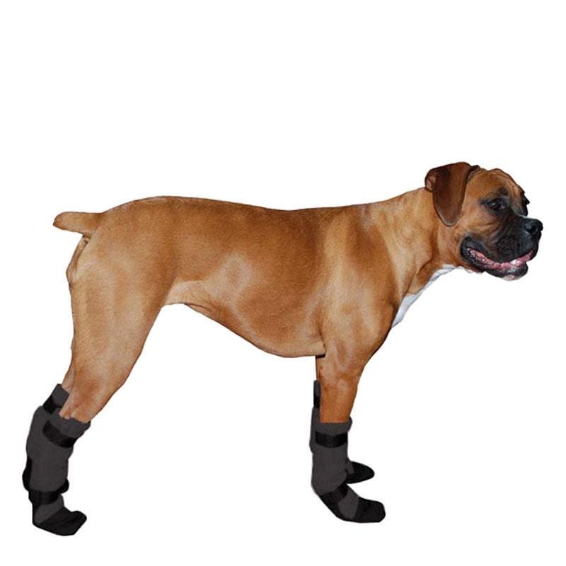 Boxer Dog Wearing Shoes