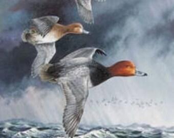 Redhead Migration