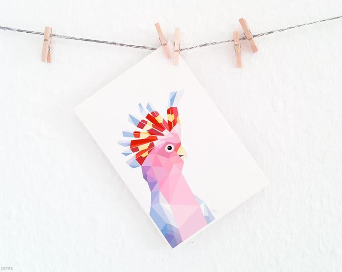 Cockatoo illustration, Pink cockatoo print, Australian cockatoo, Australian bird, Australian bird art, Australian wildlife art, Pink parrot