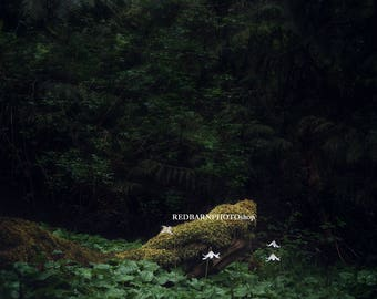 Forest Digital Background Bundle 1