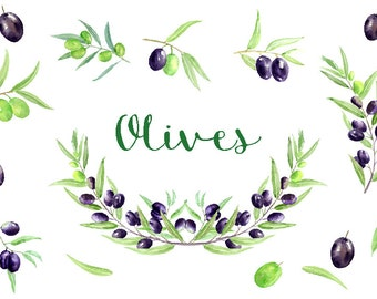 Watercolour clipart - Hand painted olives, olive branches for instant download.