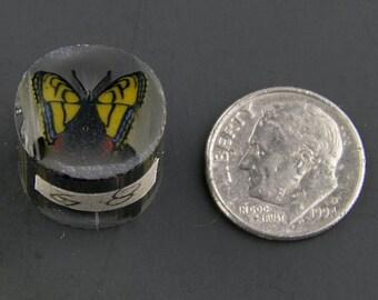 Swallowtail Boro Cane 8 grams - 117 G