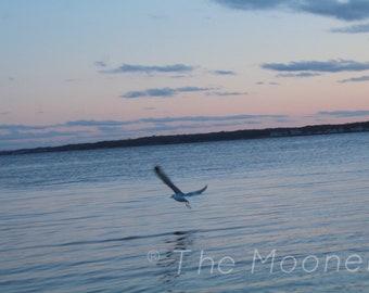 Gliding Seagull