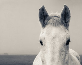 Horse Photography, Washington Landscape Photo, Modern, Horse Photo, Animals, Farm, Fine Art Photography Print, Black & White Modern Decor