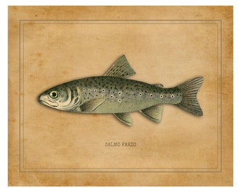 Brown Trout Print, Fly Fishing, Trout, Fresh Water, Fly Fishing Gifts, Fish Print, Brown Trout Gifts, Fly Fishing Art, Fishing Decor, Fish
