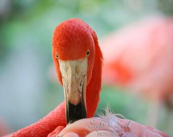 Pink Flamingo Decor, bird photography, flamingo photo, coral pink bird wall art print, fine art photo