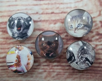Cute Kitten Fridge Magnets, Glass Kitchen Magnets, Set of 5, Kitchen Decor, Hostess Gift, Housewarming Gift, Office Decor, Locker Magnet