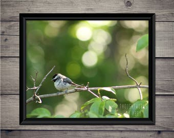 Black-Capped Chickadee - Instant Download, Digital Print, Bird, Nature, Wildlife, Photography, Print, Georgia, Wall Art, Tree, Bird Watching