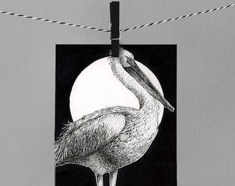 "Pelican 8x10"" drawing ART PRINT"