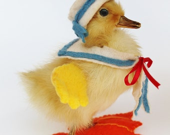 Anthropomorphic Taxidermy Little Sailor Duckling