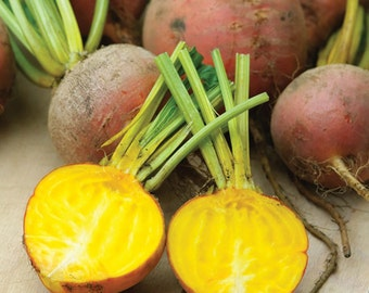 Golden Detroit Beet Heirloom Seeds - Non-GMO, Open Pollinated, Untreated