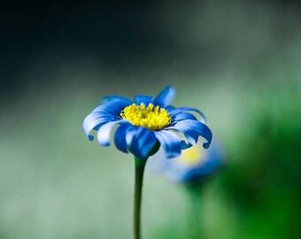 Flower Photo Print, Fine Art Photography, Stamen Photo Print, Stamen Poster Print, Nature Poster Print, Blue Flower Print, Close Up Flower