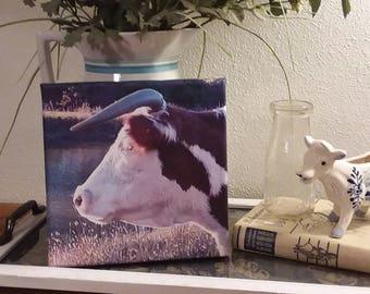 Cow photos on canvas