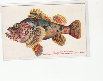 Hawaii Antique Fish Postcard, Hawaiian Fish Nohu,Very Colorful PVT MAIL CARD Territory Hawaii