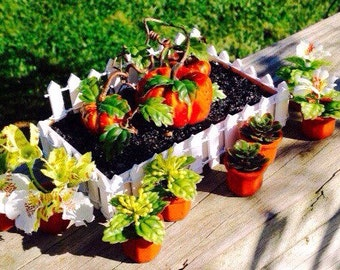 Miniature Potted Plants, Terracotta Pots with Succulents, Plants and Flowers, Fairy Garden Potted Plants, Miniature House Potted Plants