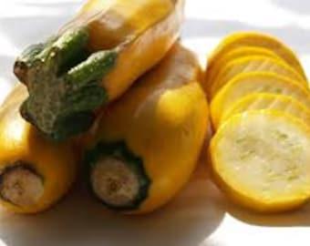 Golden Zucchini Summer Squash,  25+  Heirloom Garden Seeds