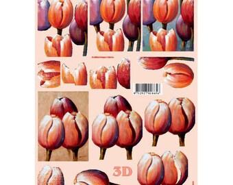 LS4169701 Orange tulips
