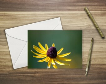 Black-Eyed Susan in the Sun Note Cards (set of 8)