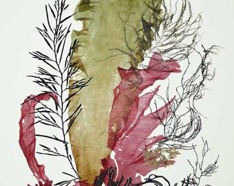 Seaweed Art, Pressed seaweeds, Sea weed Pressings, Natural Kelp Seaweed Artwork,  Beach cottage decor, Alganet Original algae Collage 22x29