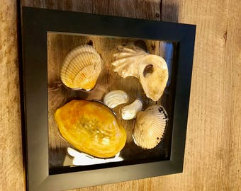"Shell Window Art Framed Clam Oyster Cockle and Angel Wing Shells from Cape Cod 7.5 "" x 7.5"" Coastal Wall Hanging Nautical Decor"
