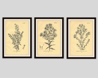 Any 3 Botanical Prints, Set of 3, Antique Botanical, Botanical Print Set, Set of Prints, Cottage Decor,  Flower Illustration, Wildflower