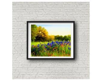 Texas Hill Country Luling Bluebonnets State Flower Blue Bonnet Blue Flower Texas Giclee Print