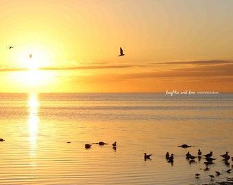 Soft Yellow Sunset Beach Photo, Ocean Seagulls Photography, Ocean Sea Travel Art, Tropical Coastal House Decor, Nautical Home Decor Wall Art