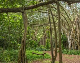 4 Forest Digital Backdrop Background Bundle
