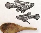 Mosquitofish: Linocut ori...
