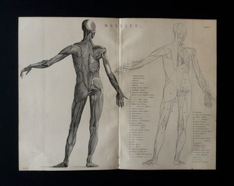 Antique Engraving ANATOMY Dissection MUSCLES Bookplate 1873 Victorian Vintage Print 1870s