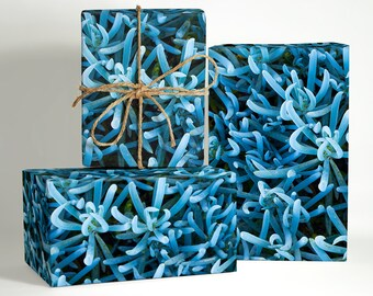 Cyan Succulent Wrapping Paper; Succulent Gift Wrapping; Succulent Wrapping Paper; Gift Wrapping; Cactus Gift Wrapping; Boho Wrapping Paper