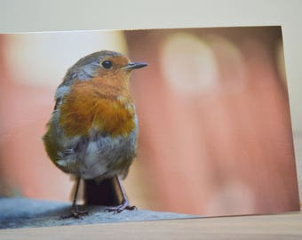 Cute Christmas Robin Close Up Blank Greetings Card 12 x 19 cm