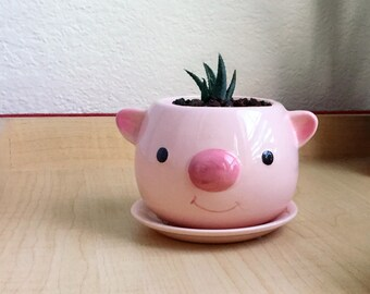 "Cute Succulent Pig Planter 3.5"" Ceramic Pot Crafts"