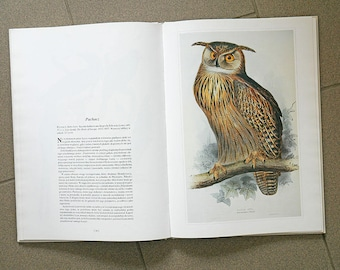 Vintage Illustrated Bird Book | Vintage Bird Illustrations | Zoology Illustrations