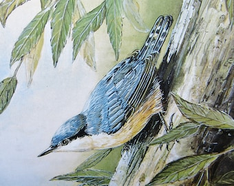 Nuthatch on Willow