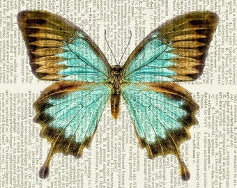butterfly, aqua blue brown print