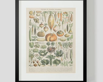 Vintage French Vegetables Print