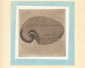 """SHELL,   8"""" x 8"""" Art Print on 80lb fine art paper from handprinted intaglio etching and monoprint"""