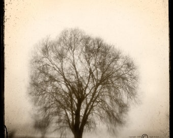 Sepia Tree Photograph--Lone Tree in Fog Sepia-- TTV Fine Art